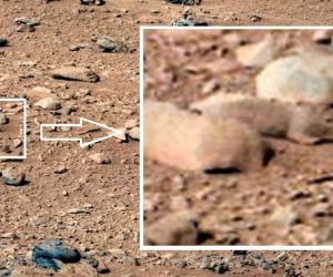 Is that a rat on Mars?